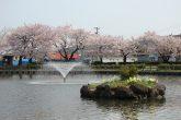【八紘園】 池の周りには遊歩道と花壇が整備され、桜の開花時期には、絶好のお花見会スポットとなっている。散歩やジョギング、子供と一緒に遊んだり、お弁当や休憩に楽しめます。