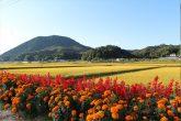 【田んぼの風景】 天栄村に広がるのどかな風景です。