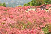【高柴山】 高柴山は、福島県田村市と小野町の境界にそびえる山。標高884m。うつくしま百名山に選定されています。